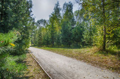 Road in a forest. Road in the forest and the trees Royalty Free Stock Photos