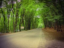 Road in forest Royalty Free Stock Images