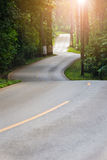 Road in forest. Road trough a beautiful colored green forest Stock Photography