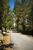 Road through forest, Uttarkashi District, Uttarakhand, India Royalty Free Stock Images