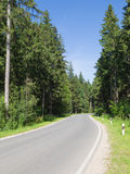 Road in the forest, vertical Royalty Free Stock Images
