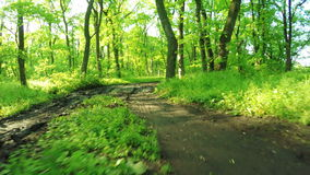 Road in forest stock footage