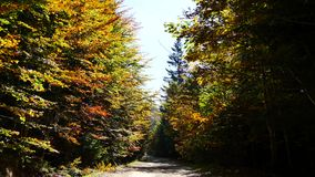 Road in Forest stock video footage