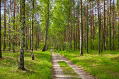 Road by the forest. Stock Images