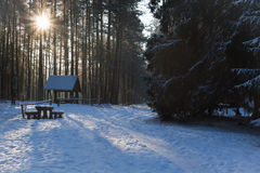 Road in the forest at winter Stock Photography