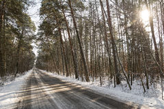 Road in the forest. In winter Stock Photos