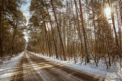 Road in the forest. In winter Stock Images