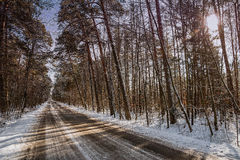 Road in the forest. In winter Royalty Free Stock Image