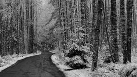 Road in the forest. Road in the winter forest royalty free stock image