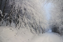 Road in forest during the winter Royalty Free Stock Photos
