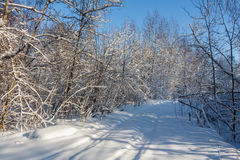 The road through the forest. Winter. The road through the forest, covered with snow. Winter. Russia royalty free stock photo
