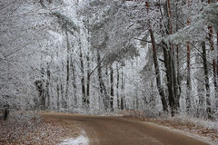Road in forest in winter. A frosty morning Royalty Free Stock Images