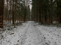 Road through forest in winter. A road leading through a snowy forest in winter Stock Photos
