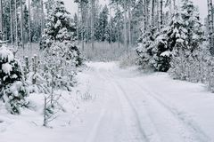 Snow road in the forest in winter in Russia Stock Photos