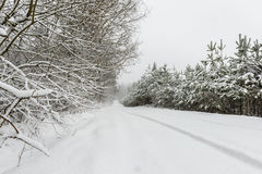 The road in the forest in winter snowfal Royalty Free Stock Photography