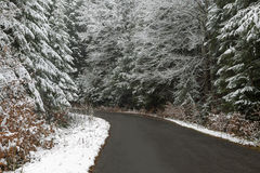 Road through the forest during winter Royalty Free Stock Images