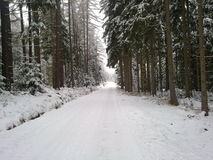 Road through the forest in winter. Road through the forest under a blanket of snow stock images