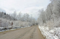 Road in forest in winter. Stock Images
