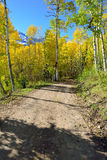 Road through the forest of yellow aspen during the foliage season Stock Photography