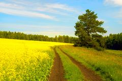 Road in the forest yellow field Stock Images