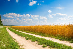 Road between forest and yellow field of wheat Royalty Free Stock Photography