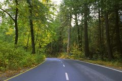 Road through forest in Yosemite Valley Royalty Free Stock Photography
