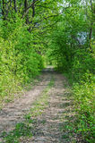 Road in forestry. The meandering view of road or track passing through deciduous green forest stock photography
