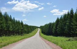 Road through forests Stock Photography