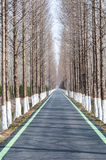 Road in the forrest Royalty Free Stock Image