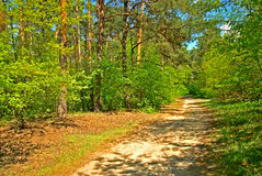 Road in a forrest Stock Photos