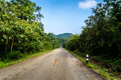 Road in forrest Royalty Free Stock Photos