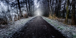 Road into the forrest during the winter. Foto during the winter, long path into the forest Stock Images
