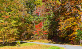 Road framed by colorful autumn trees in the dense thicket. Royalty Free Stock Photo