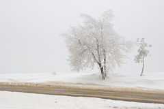 Road on the frosty day. Winter landscape with road on the frosty day Royalty Free Stock Images