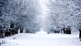 Road through frozen forest with snow. Beautiful winter day in trees stock photography