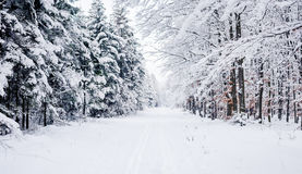 Road through frozen forest with snow. Royalty Free Stock Photos