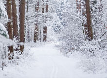 Road through frozen forest with snow. Stock Photo