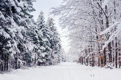 Road through frozen forest with snow. Royalty Free Stock Images