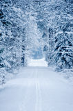 Road through frozen forest with snow. Stock Image