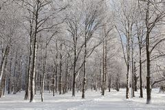 Road through frozen park, witer Royalty Free Stock Images