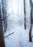 Road through frozen winter forest Royalty Free Stock Images