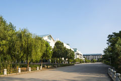 The road full of green trees on either side of the campus royalty free stock photos