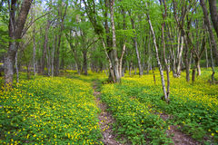 Road in spring forest Royalty Free Stock Image