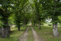 Road in a garden Royalty Free Stock Image