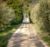 Road in the garden Royalty Free Stock Photo