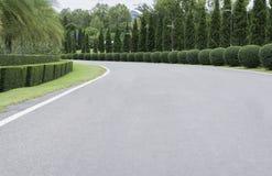 Road in garden. Tree outdoor Stock Image