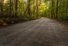 Road Through Gee Creek Forest Stock Photos