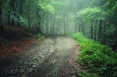 Road through a geen forest after rain. With fog Royalty Free Stock Photography