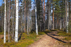 Road goes in spring European forest Stock Photography