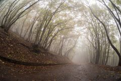 The road going deep into the misty forest royalty free stock photography